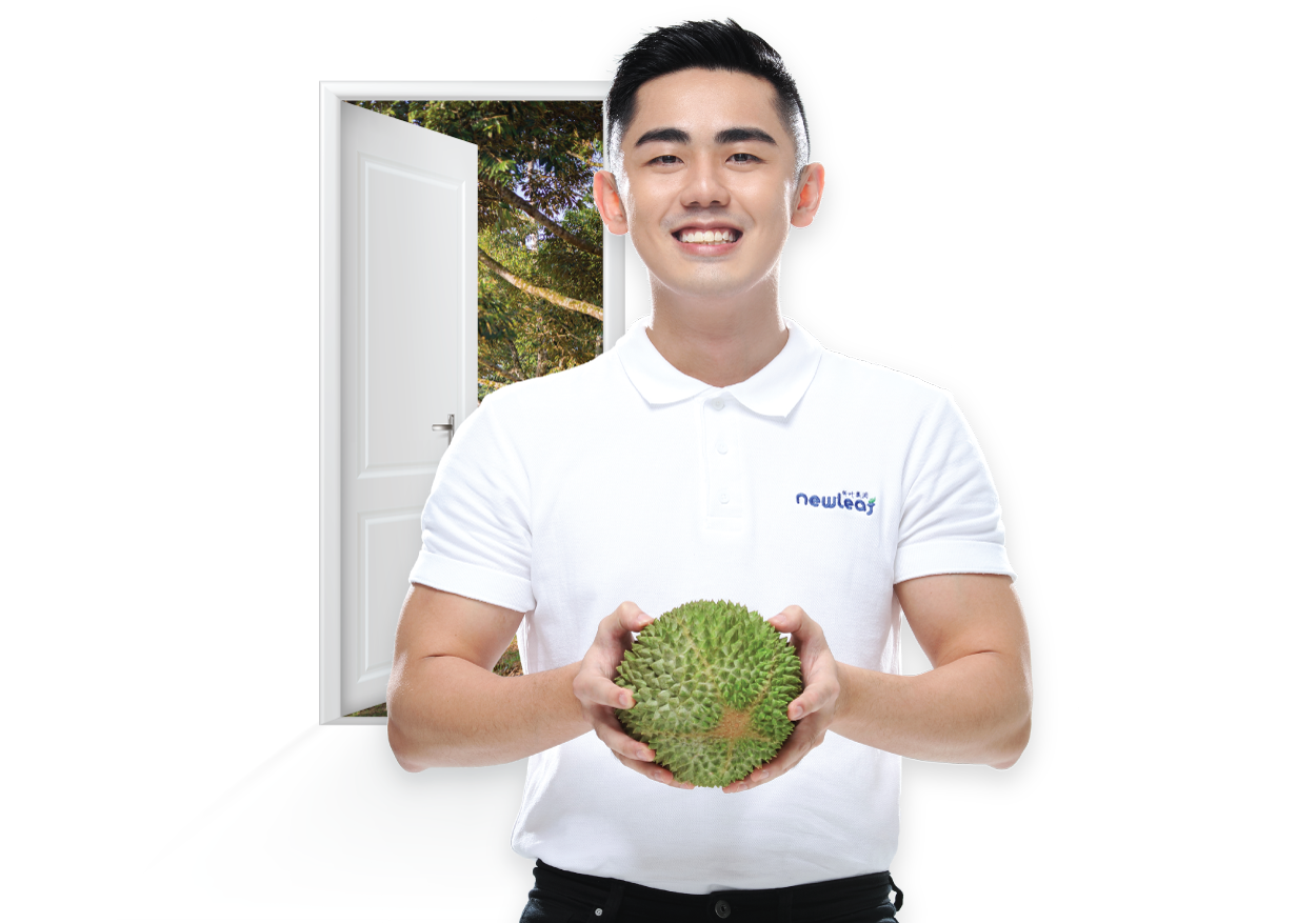 Musang King Durian Supplier Exporter Durian from farm to your doorstep