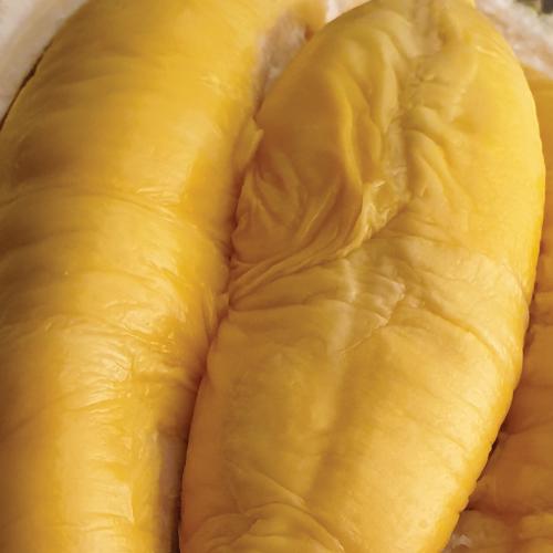 Durian Supplier Exporter Musang
