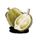 D1 Durian Malaysia