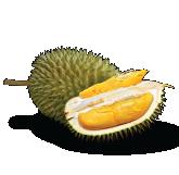 D101 Durian Malaysia