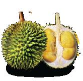 XO Durian Malaysia