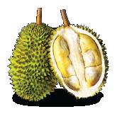 Teka Durian Malaysia