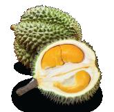 Black Thorn(D200) Durian Malaysia
