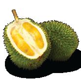 D24 Durian Malaysia