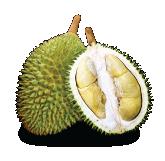 Golden Phoenix(D198) Durian Malaysia