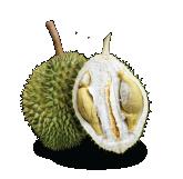 Types of Malaysia Durians Green Bamboo Durian Malaysia