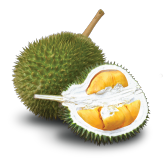 Types of Malaysia Durians Red Prawn